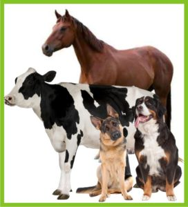 Veterinary 272x300 Ancalima   Manufacturer & Exporter of Cosmetic & Pharmaceutical Formulations